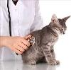Ветеринарные клиники в Илезе